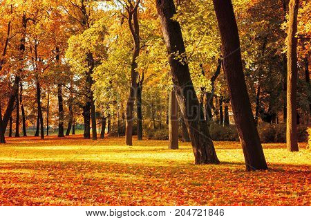 Autumn landscape of October autumn park in sunny weather. Spreading autumn trees with fallen autumn leaves. Sunny autumn landscape view of autumn city park with autumn fallen leaves on the ground