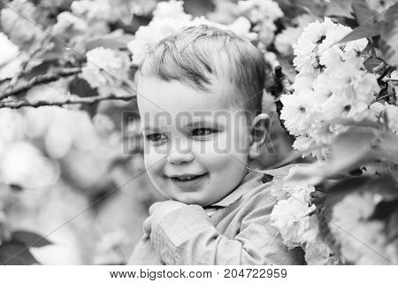 Cute happy baby boy little child with blond hair in blue shirt smiling among pink blossoming flowers and green leaves on sunny spring or summer day outdoors on natural background