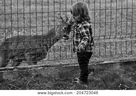 Carefree little baby boy playing with young deer behind the fence