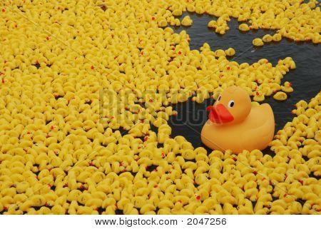 Duck Race Duck
