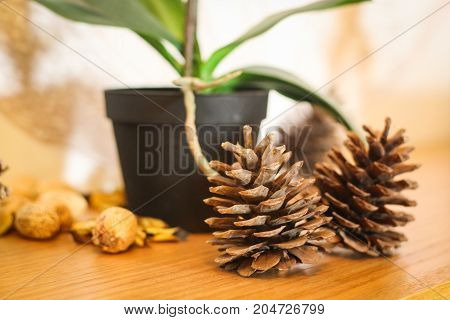 A house plant and two acorns decorating a clinic