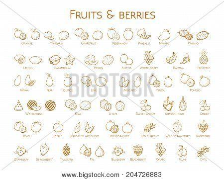 Outline orange linear web icon set - Fruit & berries Thin bold Line food Icons For logo label Orange banana melon apple blueberrycranberry kiwi cherry peach fig kiwi tropical collection on white