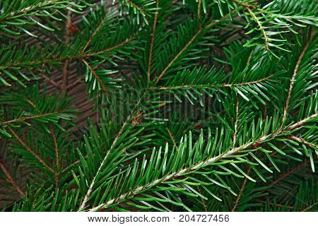Christmas tree branches textured background. Closeup of green pine tree twigs.