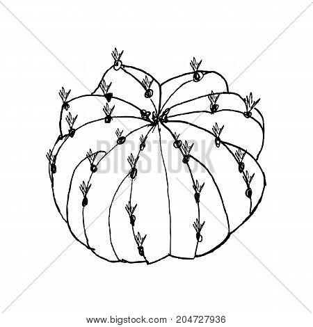 Hand Drawn Cactus Echinopsis, Liner Vector Illustration