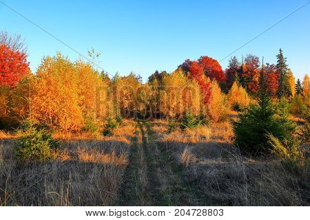 The wide trail leads to the beautiful golden forest sky on a sunny autumn day.