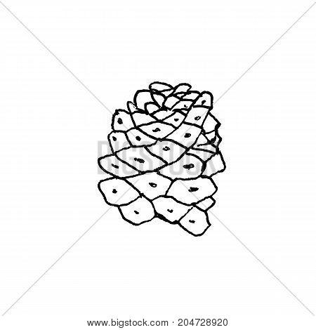 Hand Drawn Cactus Monadenium Ritchieii, Liner Vector Illustration On White