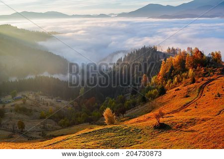 Thick fog like milk covered the valley behind which rise mountain hills on which fall warm rays of the sun. Autumn scene in the sunny day.