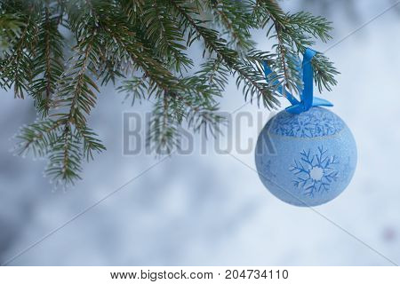 A Blue Fur-tree Toy On A Branch Of Blue Fir-tree Blue, Green, White, Colorado Blue Spruce, Picea Pun