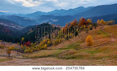 The wide trail leads to the beautiful forest sky with clouds on a sunny autumn day. Autumn scenic landscape with golden trees orange bushes yellow grass and blue sky with clouds.