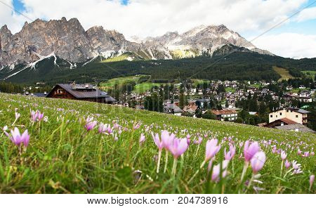 View from Cortina d Ampezzo meadow with saffrons and mount Cristallo Alps Dolomites Mountains Italy