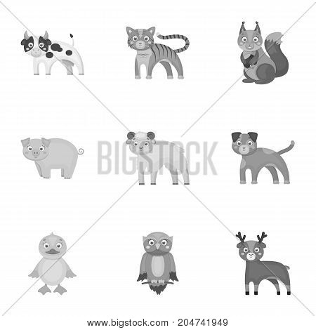 Nature, toys, farm, zoo and other  icon in monochrome style.Kangaroo, marsupial, Australia, icons in set collection.