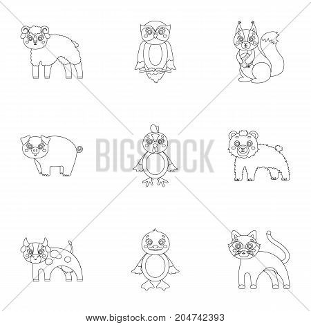 Nature, toys, farm, zoo and other  icon in outline style.Kangaroo, marsupial, Australia, icons in set collection.