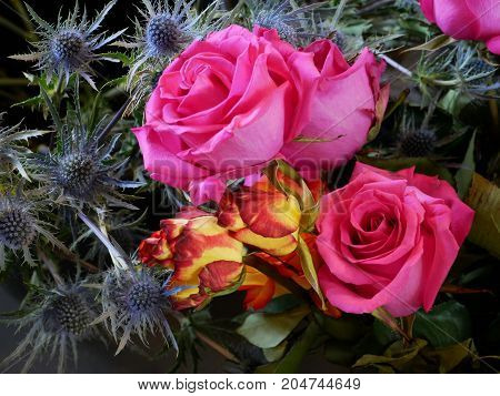 pink and red tipped yellow Roses with Sea holly bouquet