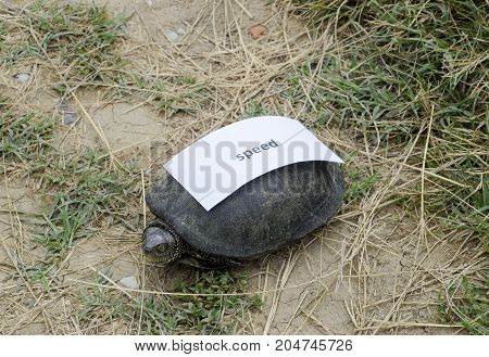 A Bad Internet Symbol. Low Download Speed. Slow Internet. Ordinary River Tortoise Of Temperate Latit