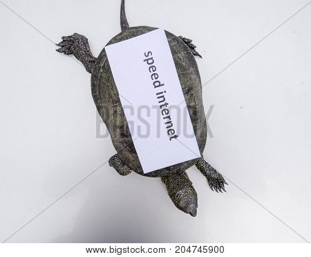 Internet Speed. A Bad Internet Symbol. Low Download Speed. Slow Internet. Ordinary River Tortoise Of