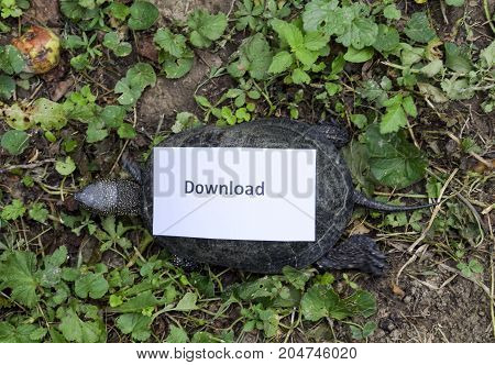 Download. A Bad Internet Symbol. Low Download Speed. Slow Internet. Ordinary River Tortoise Of Tempe