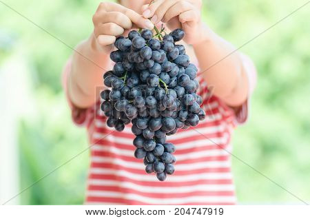 Woman holding red grape in hand,Grape harvest,Healthy fruit
