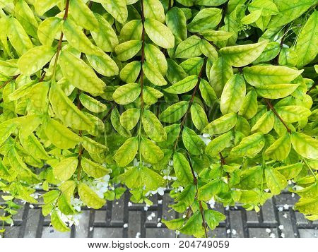 Green leave background. Freshness of green color in nature.