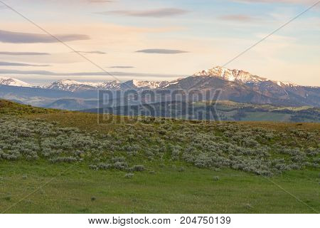 Blacktail Plateau with a view of snow capped mountains in the distance and a grassy green meadow with sagebrush in the foreground.