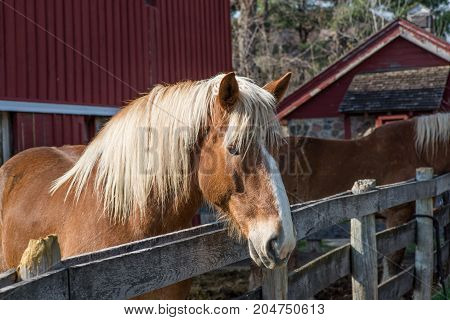 Portrait of a brown horse on a sunny day
