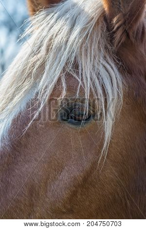 Close up of a horse eye on a sunny day