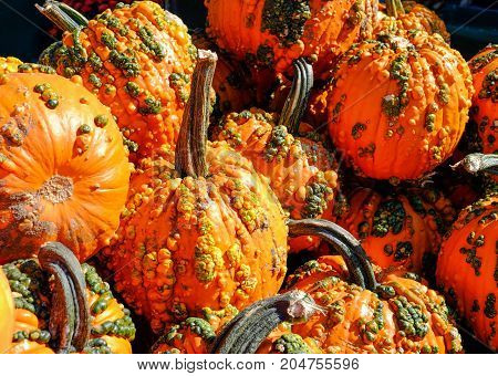 Pile of Pumpkins with Warts at a fresh market