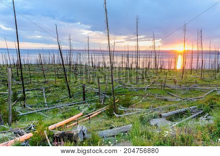 Dead Tree Trunks resulting from a forest fire backlit by the setting sun across lake Yellowstone: Yellowstone National Park, Wyoming.