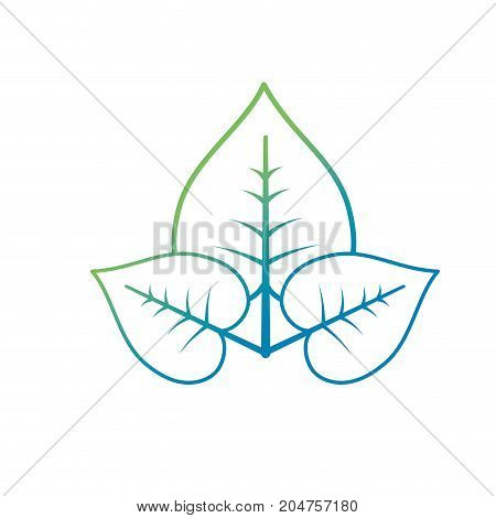 line natural and tropical leaves vector illustration design
