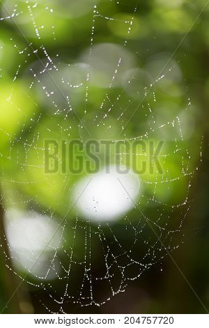 Spider on web covered by water drops, green background