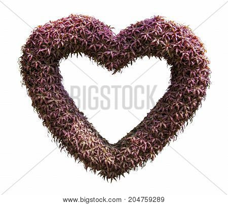 Heart made of leaf isolated on white background
