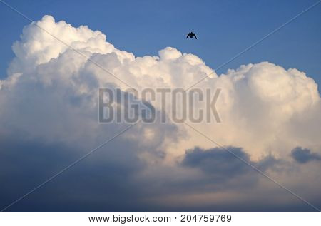 White fluffy puffy cumulus clouds on the blue sky with a silhouette of a flying bird, rainy season in Thailand