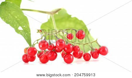 red currant  on a  white background, image