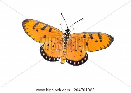 butterfly isolated on white background - stock image
