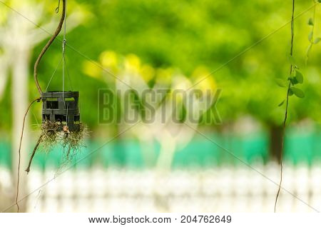 Hanging Pot And Root On Green Background