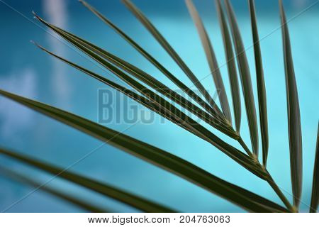 near pool tropical plant. summer time. tropical mood. palm leaves. warm sea. summer vacation. summer day. vacation time. swimming pool. spa vacation. travel concept. relax time
