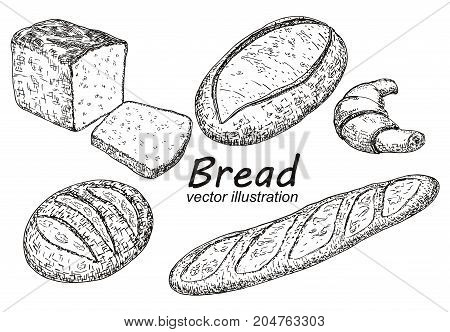 Vector vintage hand drawn illustration of different kinds of baked goods. Bread, loaf, baguette, croissant design elements for bakery or bake shop.