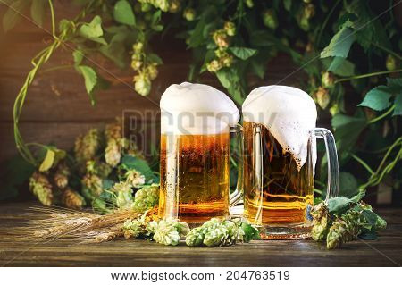 Two glasses of fresh beer, wheat and green hop on wooden table.