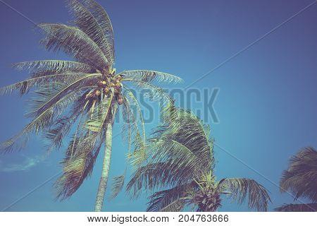Leaves of coconut on a blue sky backgroundvintage filter
