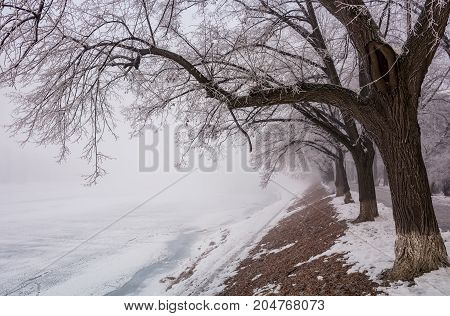 Longest European Linden Alley In Winter