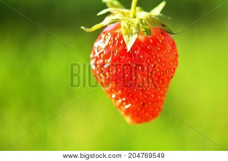 Fresh ripe strawberry on green grass background. Summer time