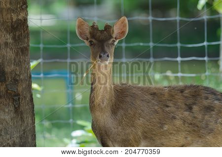 Beautiful White Tail Fawn Deer