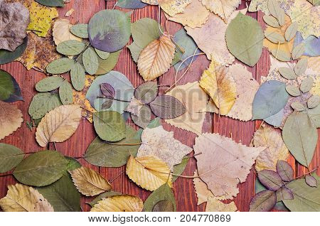 leaves from the trees lie on a wooden table