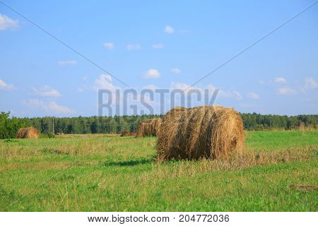 bale on field under beautiful blue cloudy sky. Photo with space for your montage