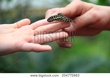 A green and black butterfly resting on children's fingers.