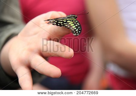 A butterfly resting on a teenage girl's fingers.