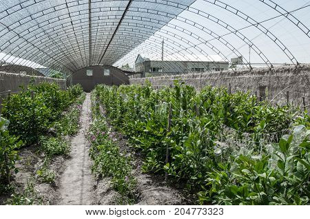 greenhouse with a transparent roof. handmade greenhouse