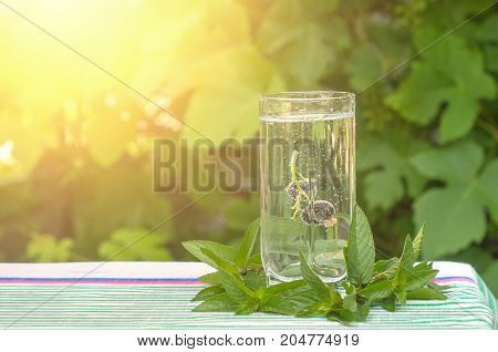 Black currant in a glass of mineral water mint leaves in the sunlight
