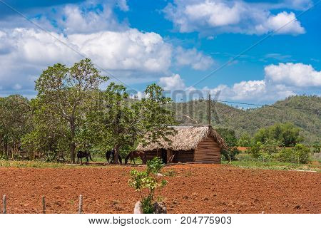 View of the building in the valley of Vinales Pinar del Rio Cuba. Copy space for text
