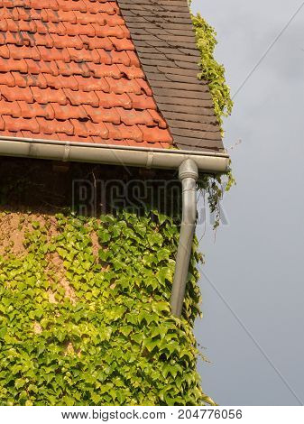 House Overgrown By Ivy