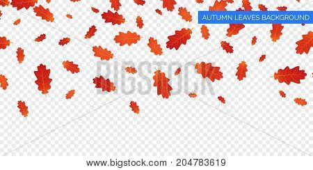Autumn background design. Autumn falling leaves on transparent background. Vector autumnal foliage fall of oak leaves